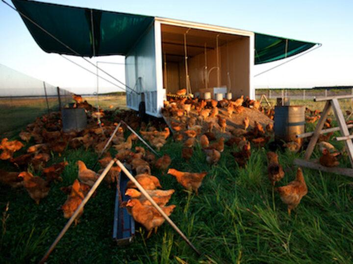 Mary's Free Range Chicken